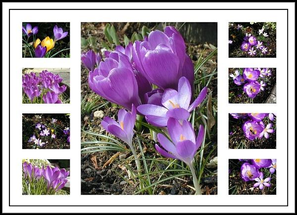 Flowers in my Garden. by rpba18205