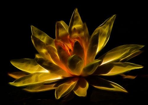 Lily of Fire by pixsellchix