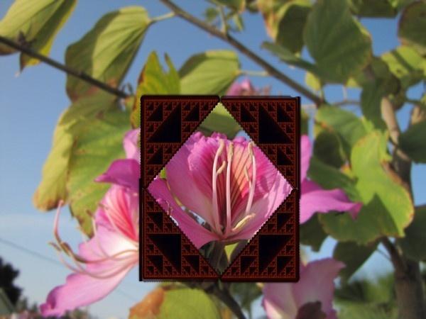 PINK FLOWER by queengu21