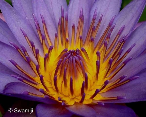 Inner whorl by Swamiji