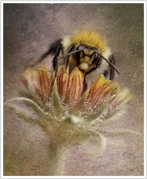 The Bee by clintnewsham