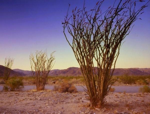 Sunset at Joshua Tree by Aldo Panzieri