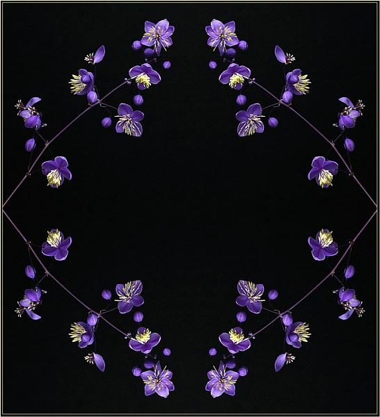 Thalictrum Kaleidoscope by Big_Beavis