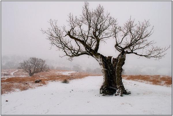 Winter by TelStar