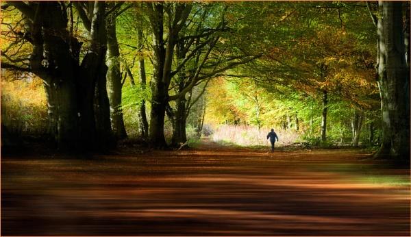 Beechwood Walker by MalcolmM