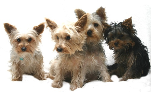 Scruffy Mutts by alfacolin156