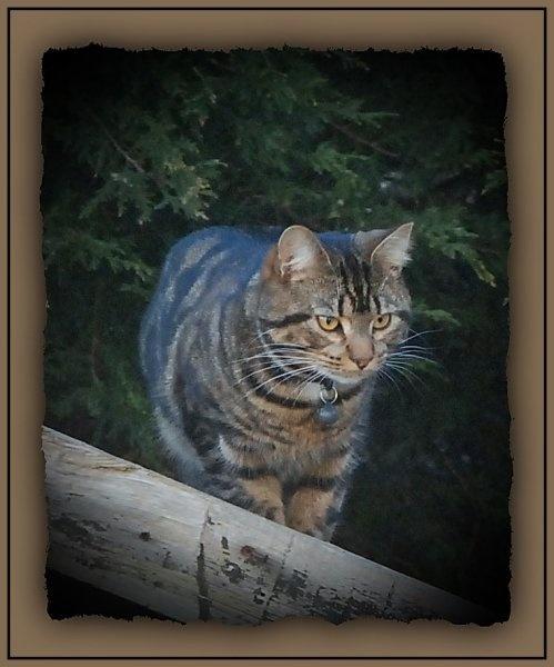 The Hunter by gerrymac
