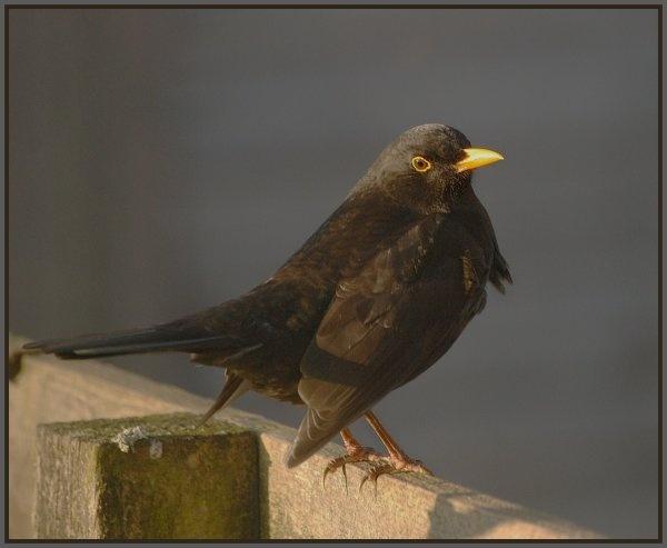 B\'bird by gerrymac