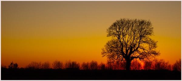 Evening Tree by kenbishop