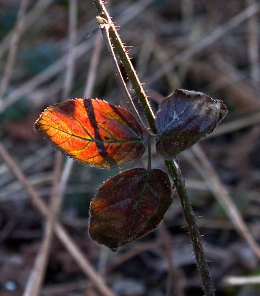 spring colours by HuntedDragon
