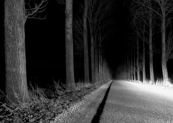 Tree Lane by rhobbie