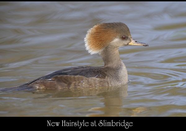 New Hairstyles at Slimbridge by maroondah