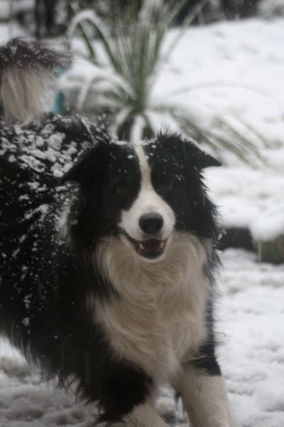 snow dog by hagrid