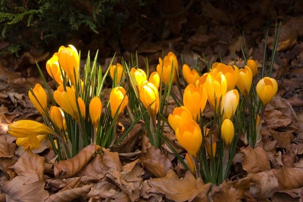Springing into Life by mlanda