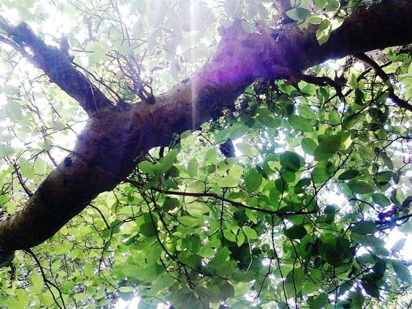 "\""leaf & light\"" by sunnilkalinndi"