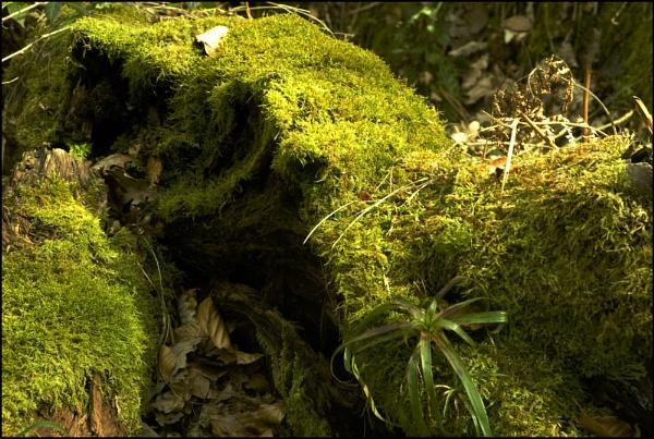 Mossy Log by jasonrwl