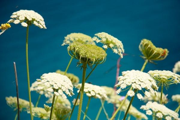 Zante Weeds by Berni