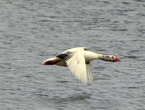 Fly 2 by saeidNL