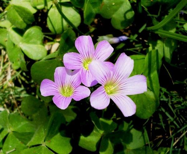 Spring 1 by Swamiji