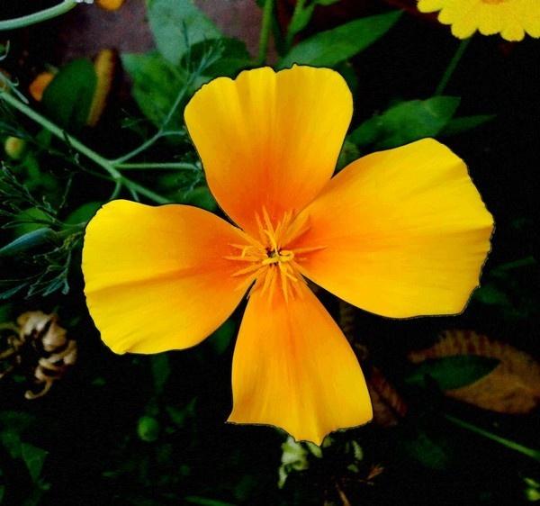Spring 2 by Swamiji