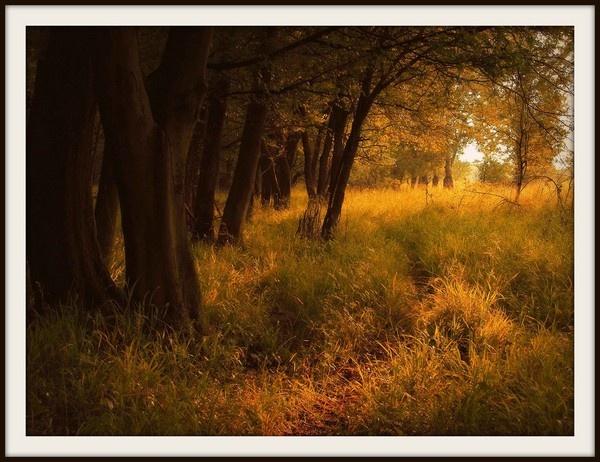 The Path by Bonico