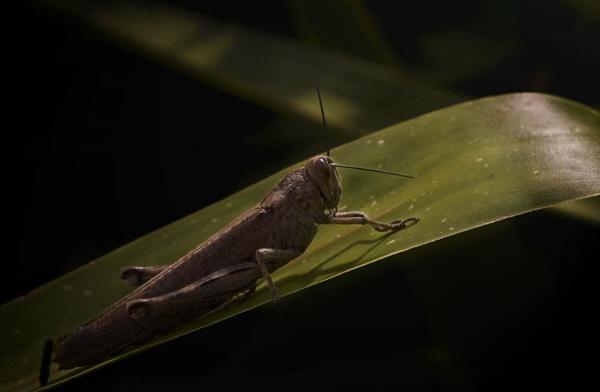 Cricket in Sunlight