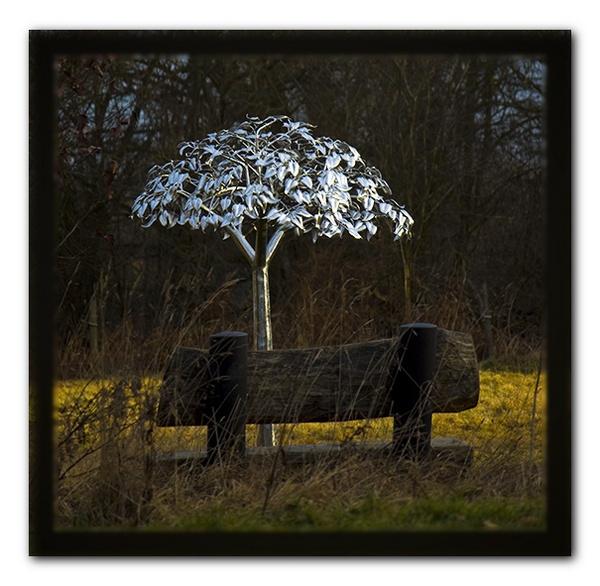 Millenium Tree by ChrisG2