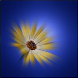 Star burst blue