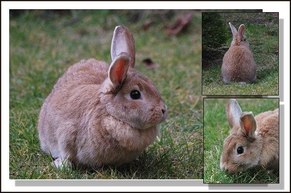 Bunny by gerrymac
