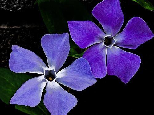 violet and blue by Fluke