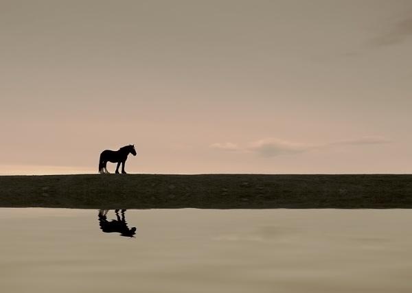 Horse by grezmel