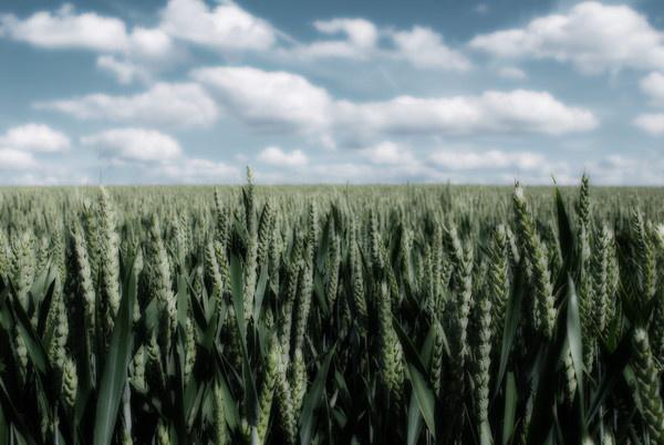 Field (Half-mono Orton) by St_Fuagowi