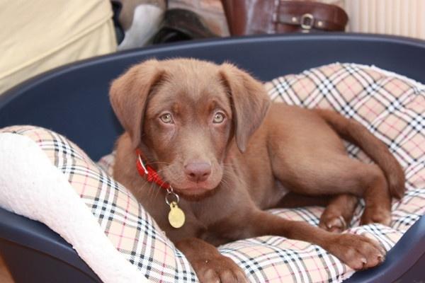 Cute millie doggie by steph_w