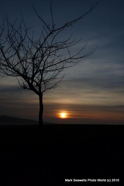 Dawn by mlseawell