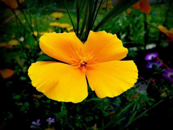 Spring 3 by Swamiji