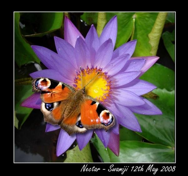 Nectar by Swamiji