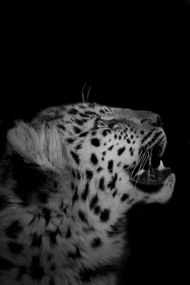 A Wishful Look by Endangered