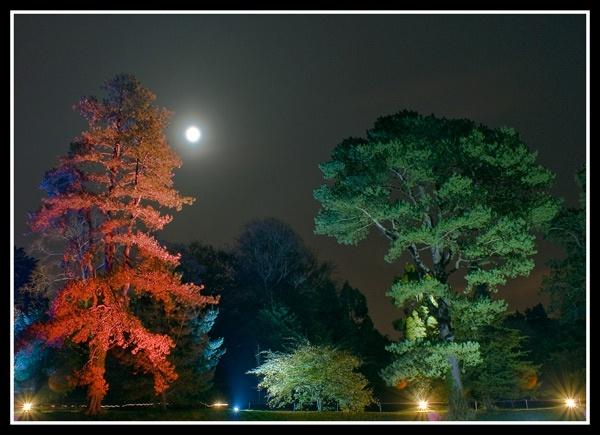treecolours by zapar40
