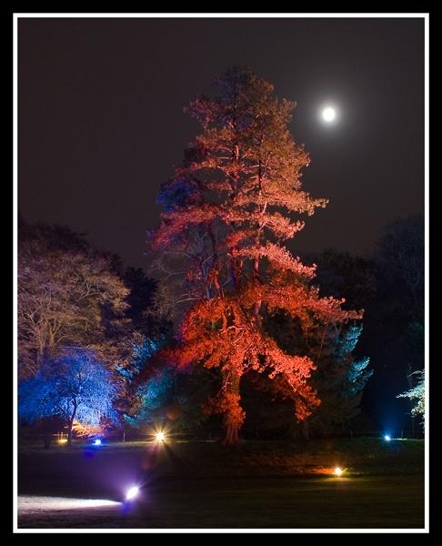 redtree by zapar40