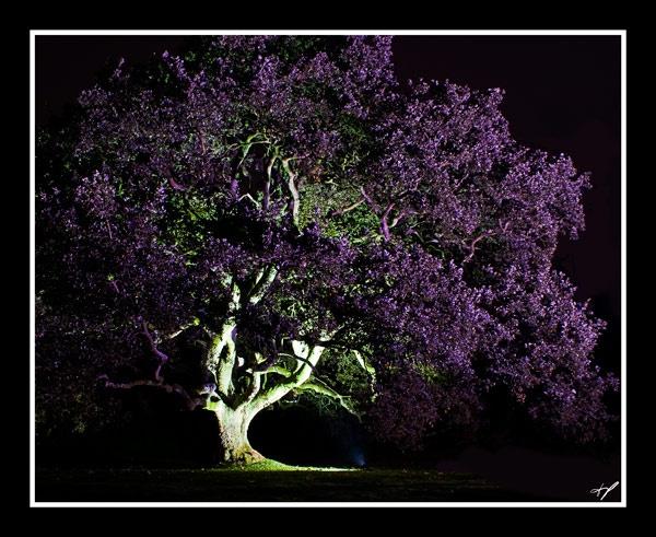 purpletree by zapar40
