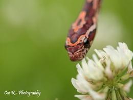 Snakes like flowers