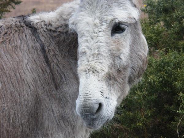 Donkey by framojunior