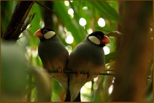Love Birds by dukestreetcarve