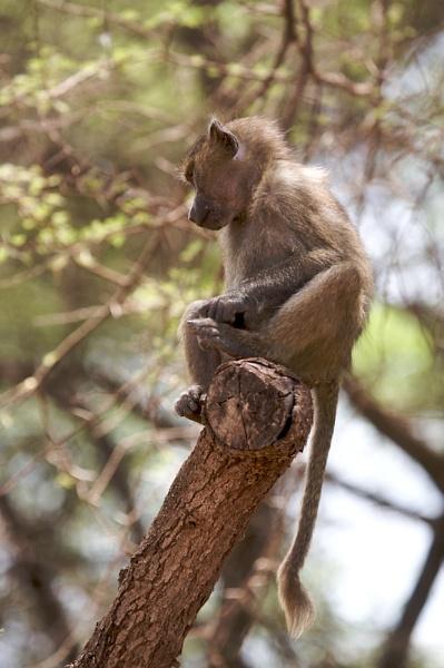 Monkey Business by vickyf