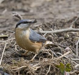nesting nutty