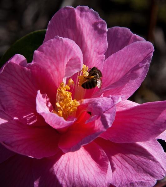 Pink flower n stripy bugger by morpheus1955