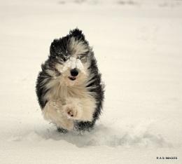 snow ball express