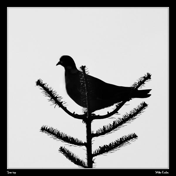 Tree top by oldgreyheron