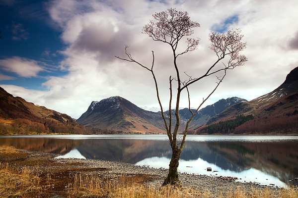 The Lone Tree by bazhutton