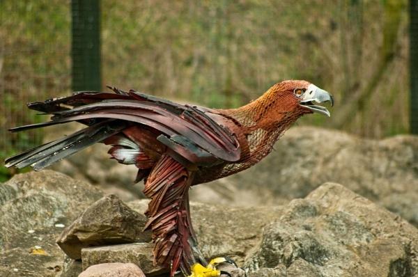 Pretty Bird by colmar